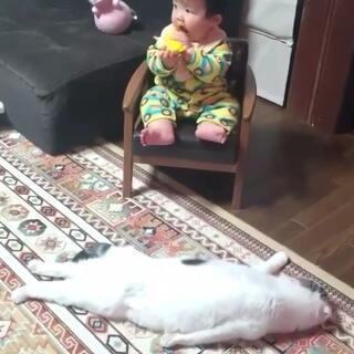 电饭煲猫原创表情的美拍:电饭煲猫和动态妹微信群死人搞笑图片笑苹果美女图图片