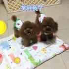 #汪星人##宠物#笑死我了,莎拉居然不愿意跟他睡!U莉被嫌弃了,你们快来安慰下它😂😂😂http://item.taobao.com/item.htm?id=560104715895鸡肉粒,训狗奖励必备!