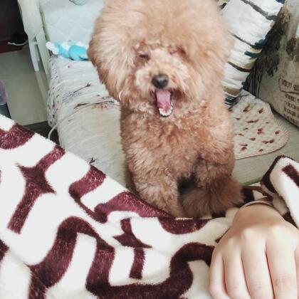 #宠物#😂😂早上凶人,我假装生气不理她,她就过来撒娇求摸摸!