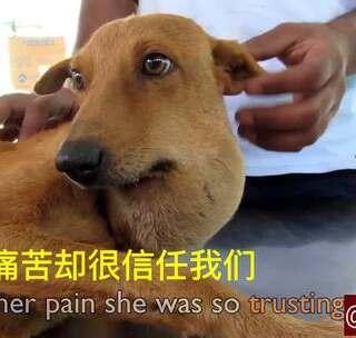 萌宠治愈师的美拍:网名救援系列第255集。流浪萌女生呆的动物图片