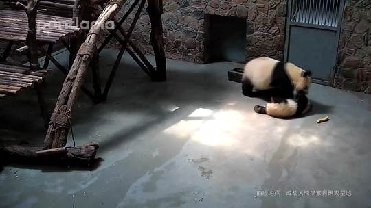 #萌团子日常# 当妈咪觉得地板有点脏……