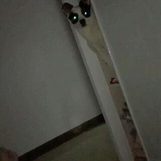 我家都是小笨狗的美拍:咬人的狗主人被抓住了