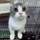 哈哈哈!节奏感超强的猫!#精选##宠物##搞笑#