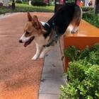 #宠物##汪星人##我要粉丝,我要上热门#雨后的天气很清爽