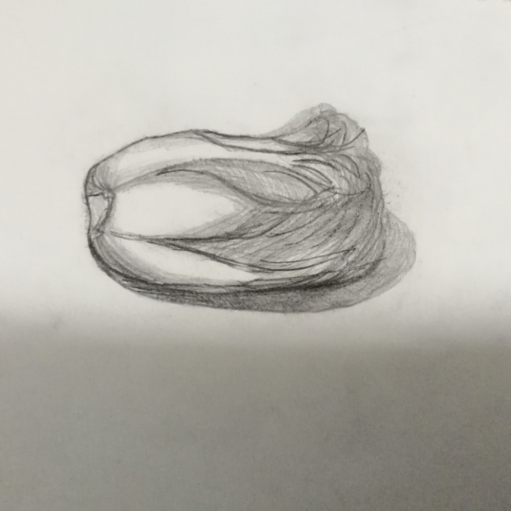 白菜素描结构图