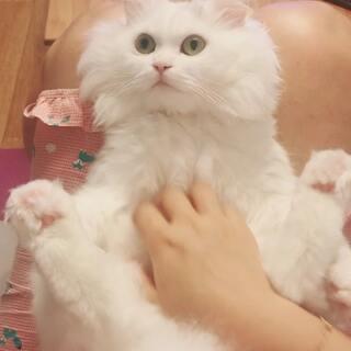 女士,按摩做的还可以吗? 舒不舒服呀?#宠物##萌猫咪##我要上热门#