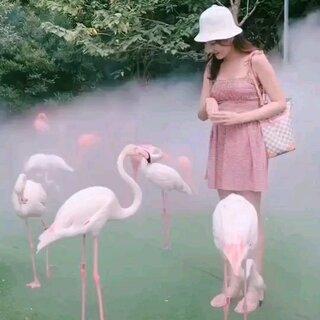 #游玩##带着美拍去旅游#@小冰 @玩转美拍 @美拍小助手 大家知道那种动物叫什么么?