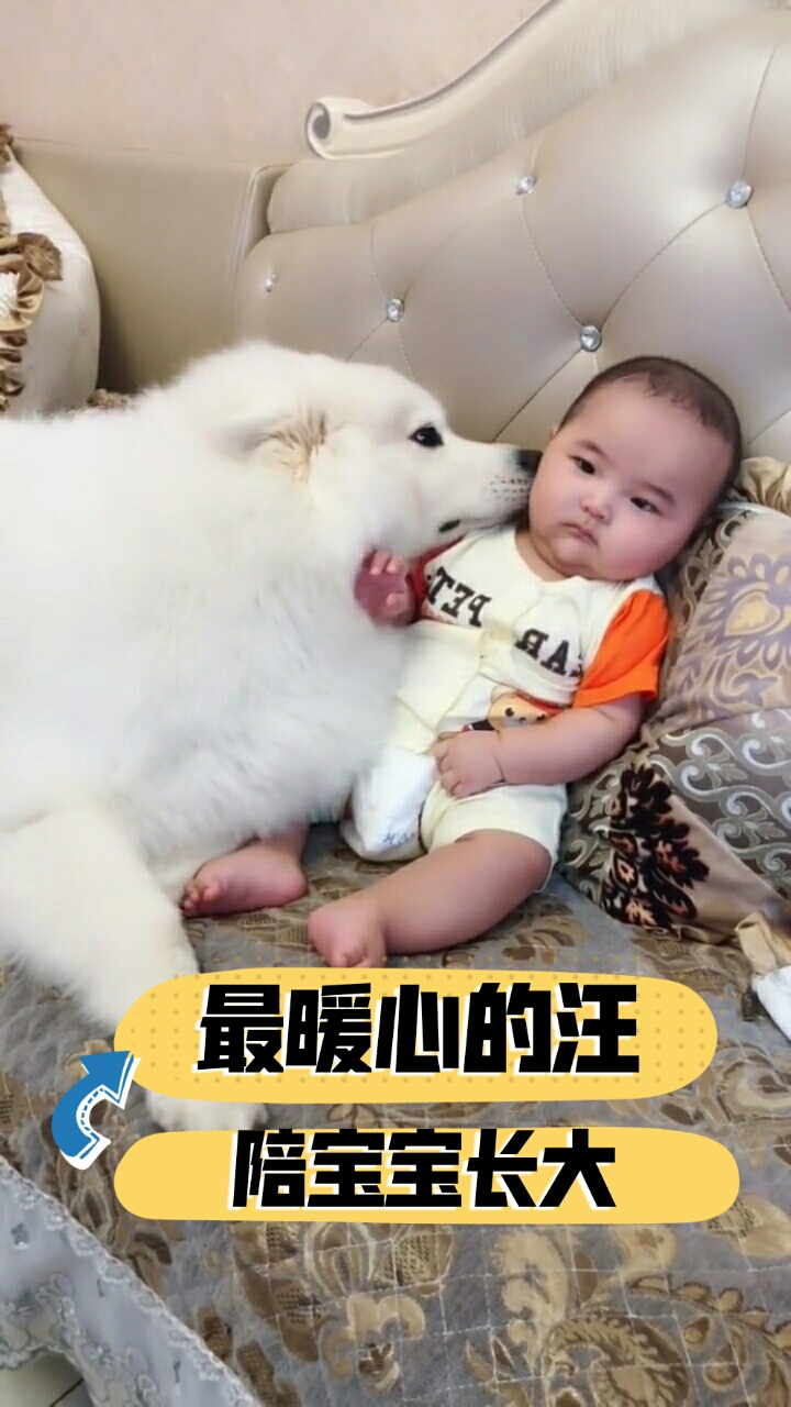 哈哈:这,我就是哄孩子命#宠物##宝宝##萌宠#