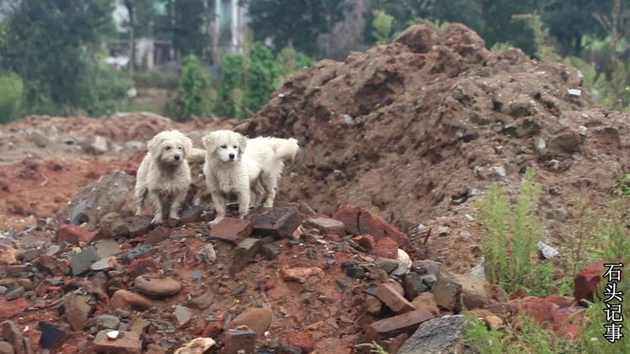 #我要上热门#农村小伙在自家门前,发现两条流浪狗,这个冬天它们该怎么过#宠物狗狗##美食#