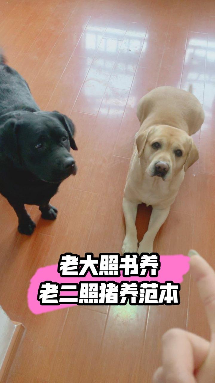 #宠物#【我家店鋪:https://shop61141321.taobao.com】