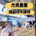 要挑戰對牛談琴!!!#尤克里里##對牛彈琴#@美拍小助手 @音樂頻道官方賬號