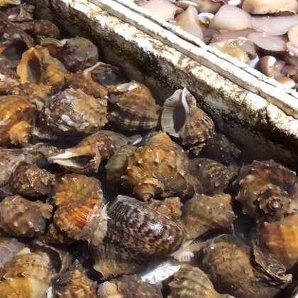 去市場買海貨千萬別被坑啊!#農村生活##海鮮#