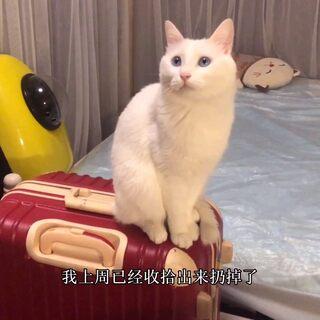 北漂獨居女子日常VLOG22/要搬家啦,房租4000漲到7000,郊區搬到市區。給自己和貓咪更好的生活條件,加油啦#我的獨居日常##北漂生活#@美拍小助手