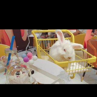 nice ??meet you 巨兔兔????巨巨巨巨可愛 Lovely Angora??