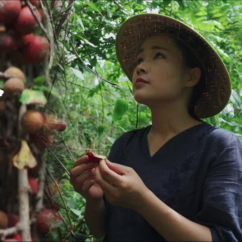 【(滇西小哥)美拍】云南的山里長著各種各樣的果子,...