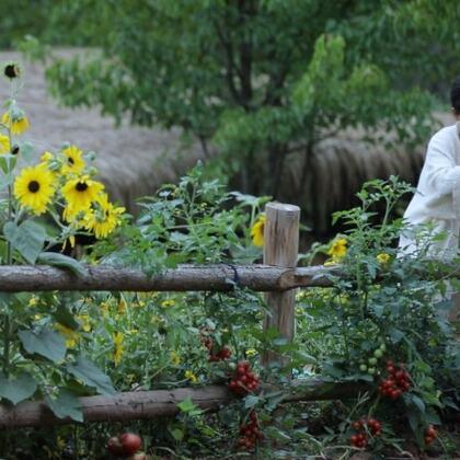 【視頻福利:從轉評贊分享里抽7位小朋友送李子柒番茄鍋底一份 https://college.meipai.com/welfare/d2d50f8b16bf8bdd 】今年春節疫情期間在家呆著無聊,給荒廢的池塘修了護欄、填了泥土種了花和菜。從了無生機到一池繁花,自然和生命總在不斷的給我們驚喜,花開好了,果子熟了,蕃茄紅了,蕃茄火鍋走起!
