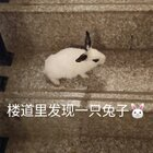 哈嘍大家好,我剛收完攤回家,上樓的時候發現一只小兔子,嚇我一跳??,還畫個煙熏妝,太可愛了。一會兒睡醒了去挨家問問誰家丟的。